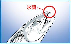 プロテオグリカンが含まれているサケの鼻