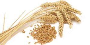 小麦はなぜ粉で食べるのか