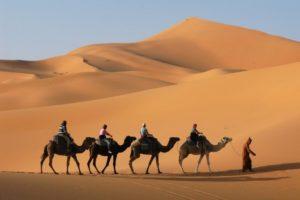 サハラ砂漠を歩くラクダ