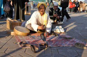 ジャマ・エル・フナ広場の生の蛇使い