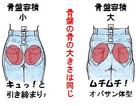 骨盤の広がりとお尻の大きさの関係