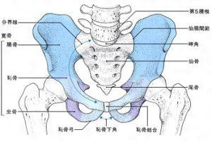 骨盤の歪みの原因