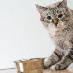 猫の好きな食べ物