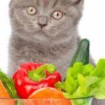 猫に与えてはいけない食べ物