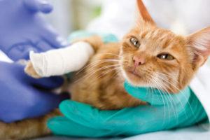 猫の保険の必要性