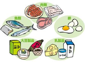 タンパク質の多い食事