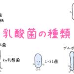 乳酸菌ダイエット