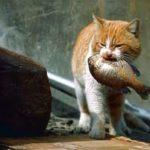 猫に魚を与えてはいけない